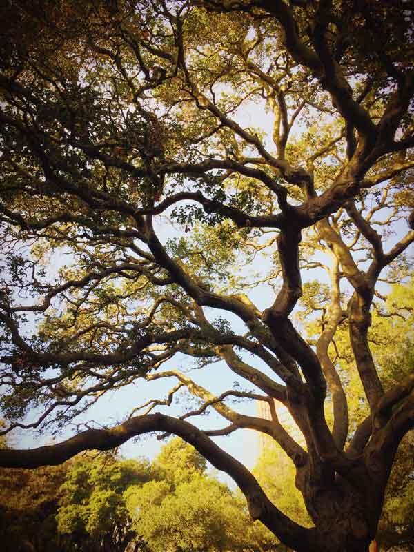 Tree-responsibility.jpg