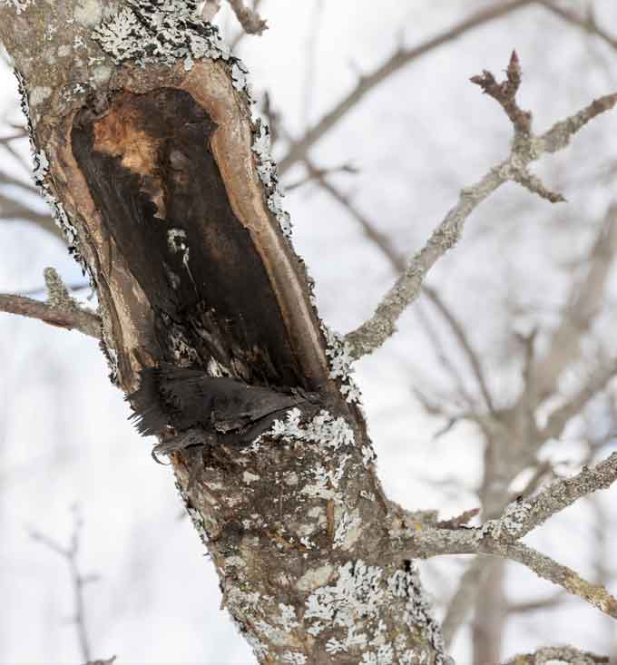 Diseased branches can burden or eventually kill a tree.