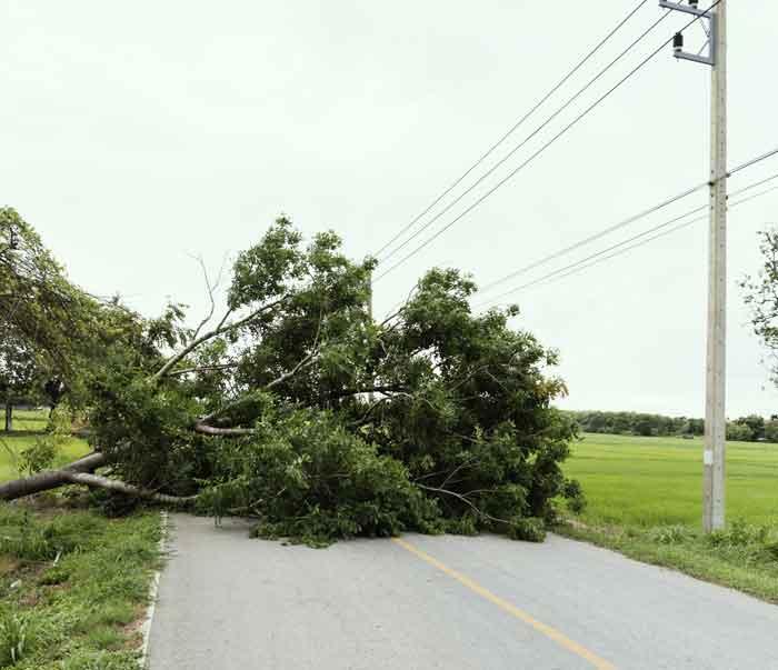 tree-road.jpg