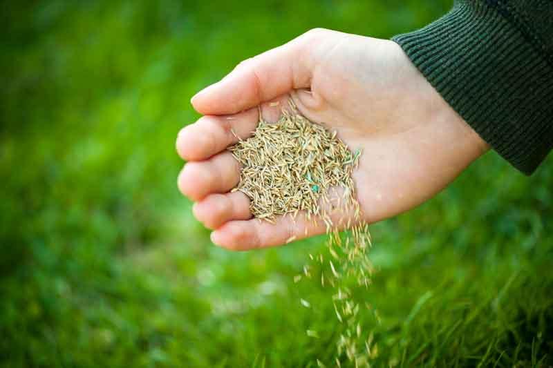 Sowing-seed.jpg