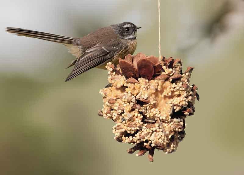 Pinecone-feeder.jpg