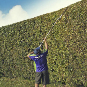 Hedge Trimming Botany Auckland