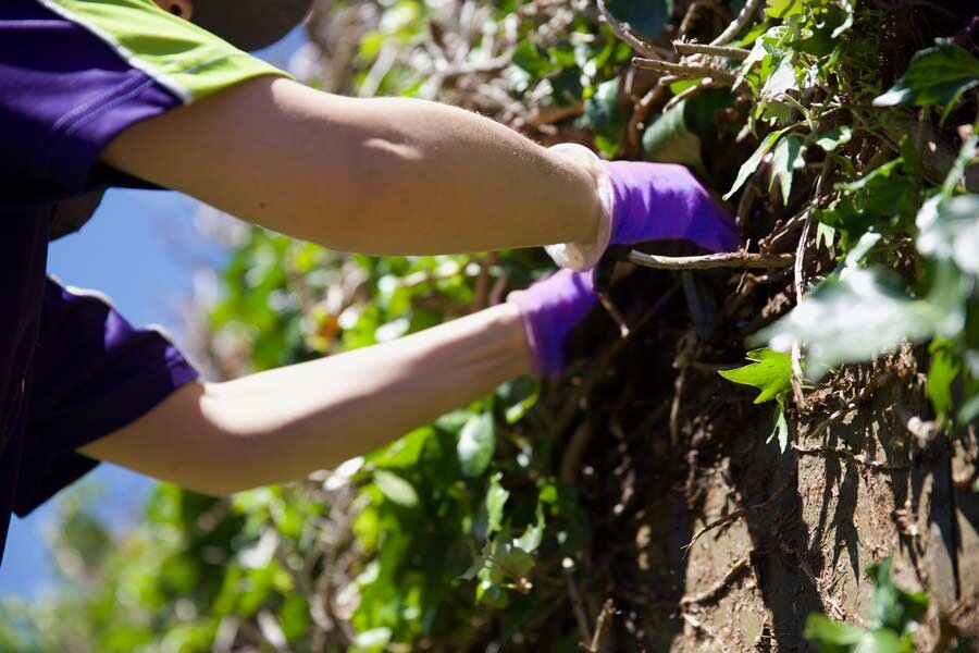 Gardening Dannemora