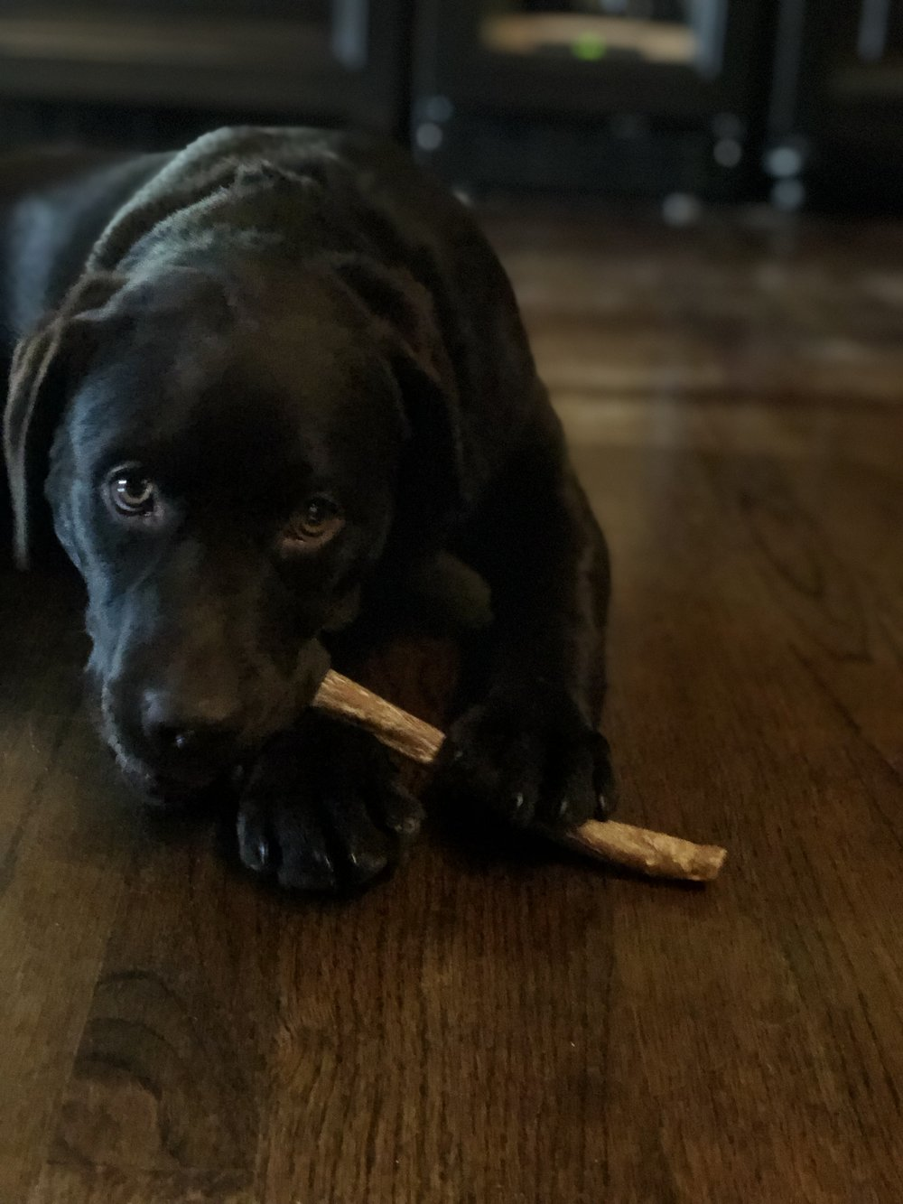 Bully sticks are always a good option for a teething puppy. One of Lucy's favorites! Especially when Mom is busy with her morning routine.