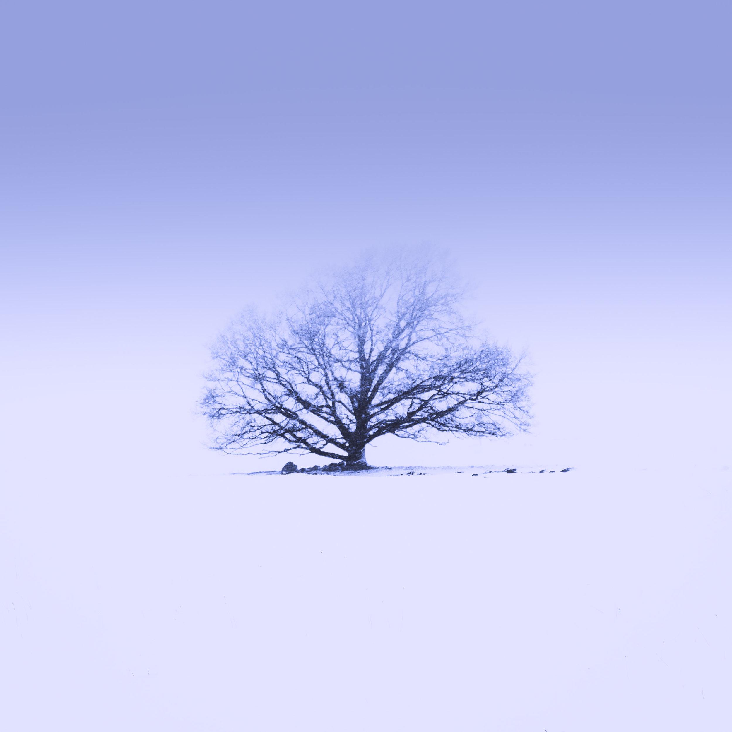 lone tree havang snow fog 1.jpg