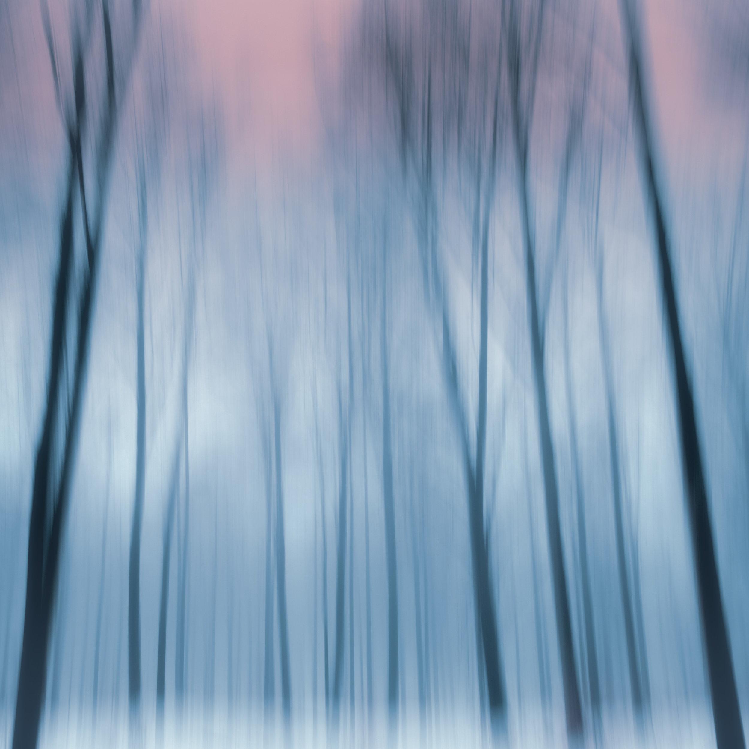 trees ecm 1 (1 of 1).jpg