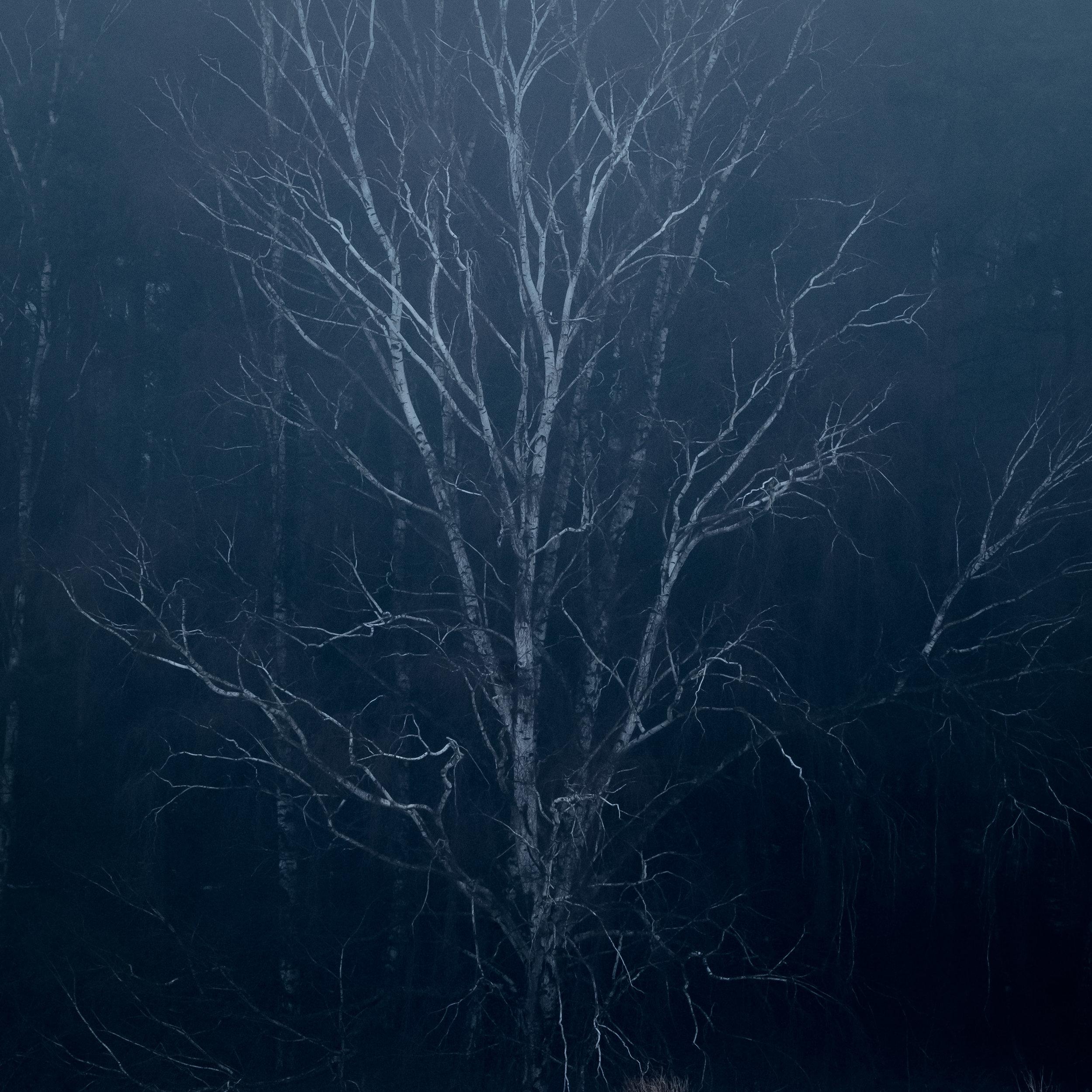 lone tree havang snow fog 3.jpg