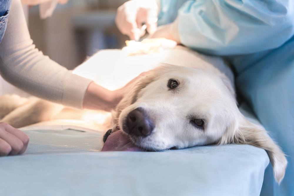 Hund operasjon.jpg