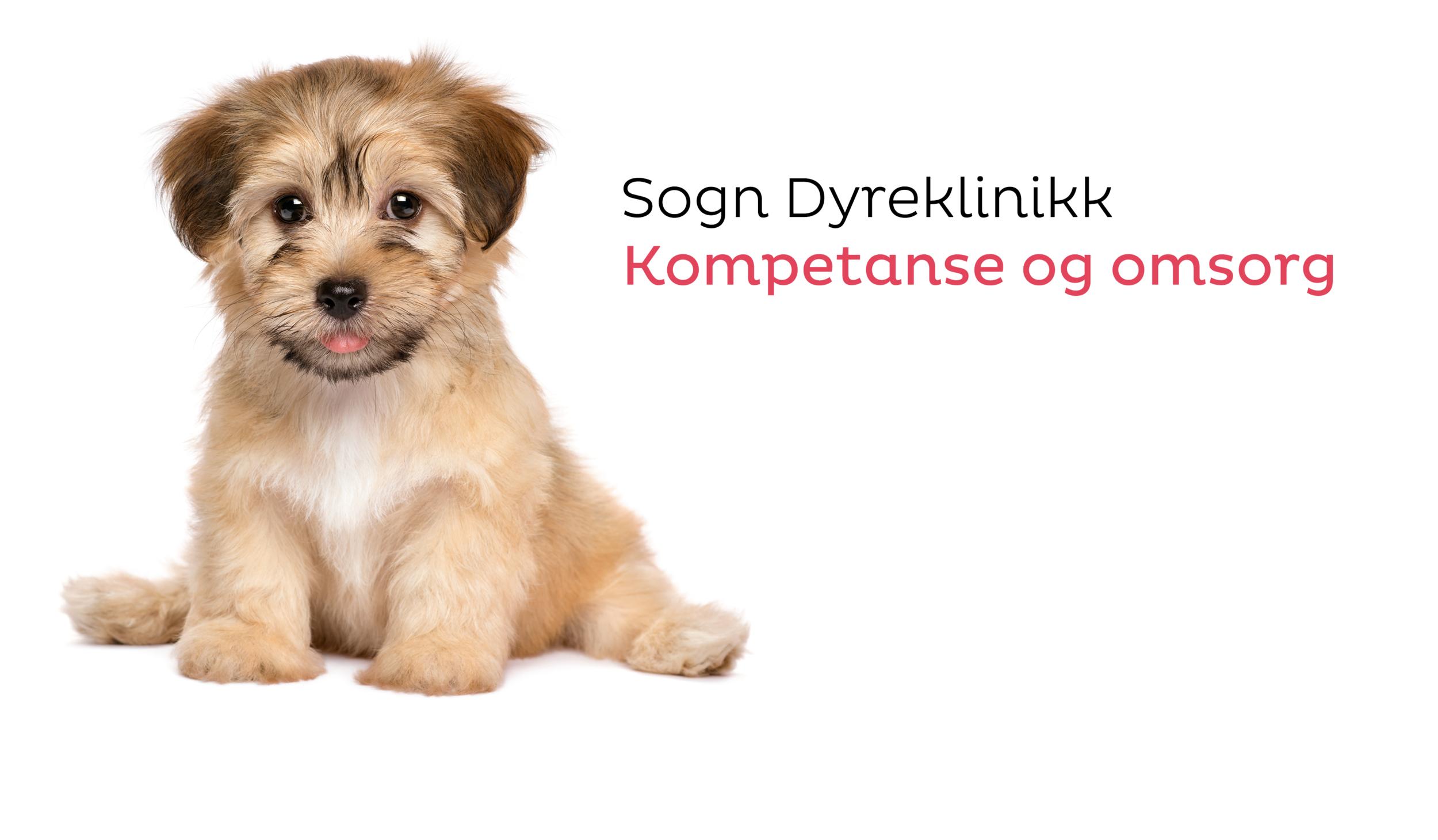 Slagord og hund.png