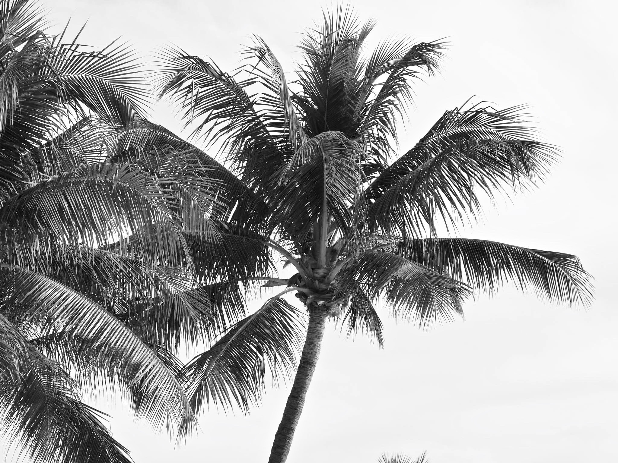 The beauty of the Palm