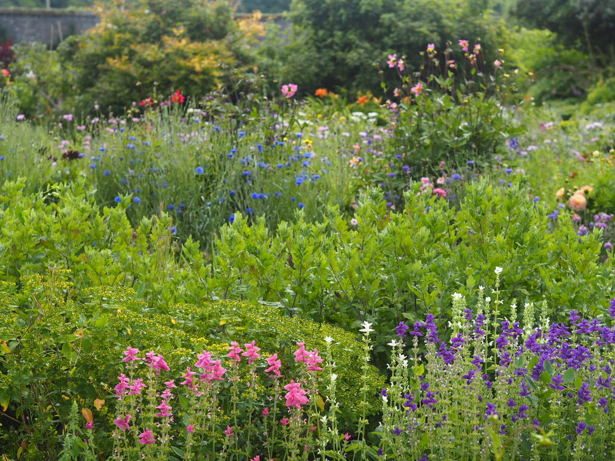 The walled garden at the main house provide every room and table with beautiful flowers