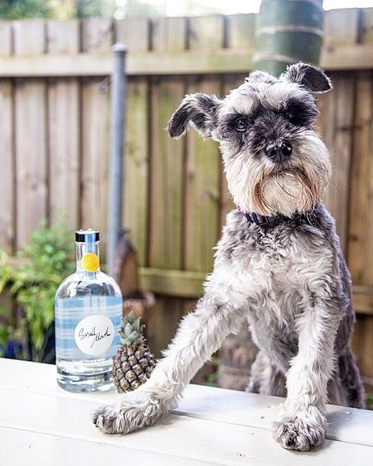 Bartenders are our best friend #thirstythursday #yearofthedog 📷 @mgdastudio . . . . #organic #madeinaustralia #vodka #cocktail #australiancraftspirits #handcrafted #weekend #bartender #dog #shoplocal #bottleshop #danmurphys #bws #aussievodka #veganfriendly #glutenfree #preservativefree #sydney #smallbatch #sydneyaustralia #sydneybars #melbourneaustralia #melbournebars #brisbaneaustralia #brisbanebars #drinkbettervodka #smallmouthvodka