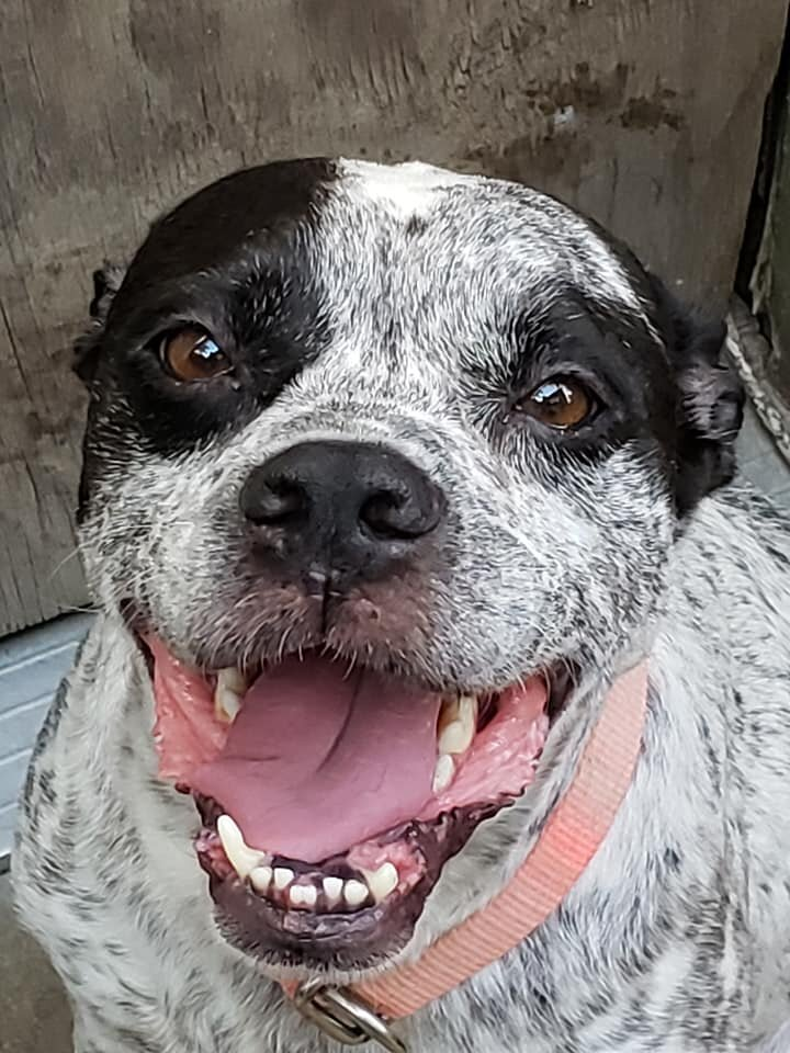 My name is Stella. I'm about 3 years old and an independent gal. Come check me out at one of my events. www.facebook.com/We Care for Paws Foundation