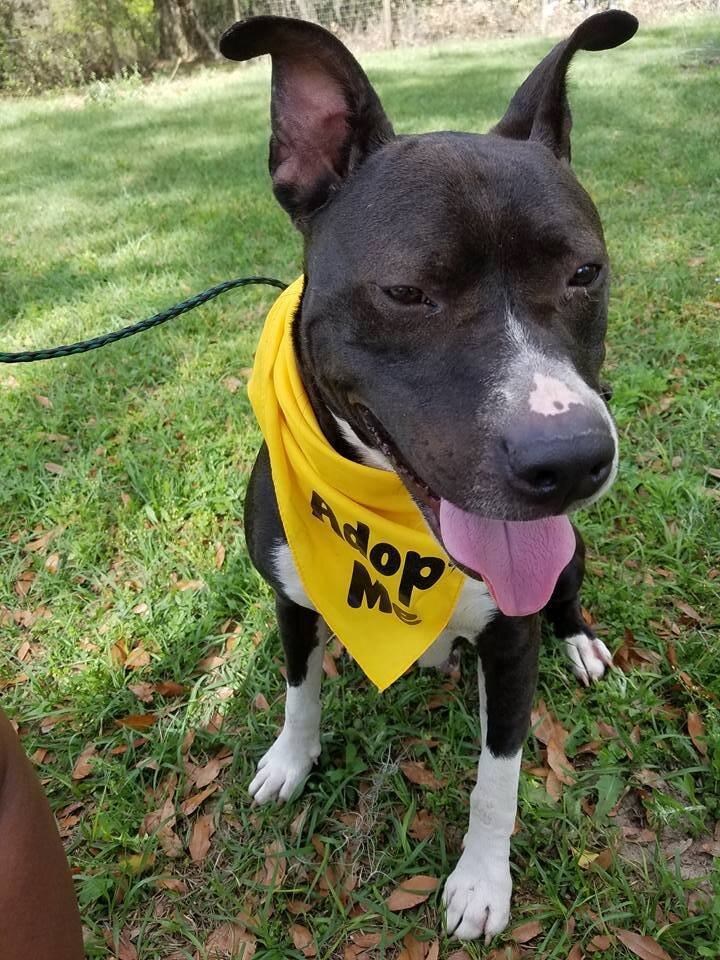 Onyx is looking for his forever home.www.facebook.com/We Care for Paws Foundation