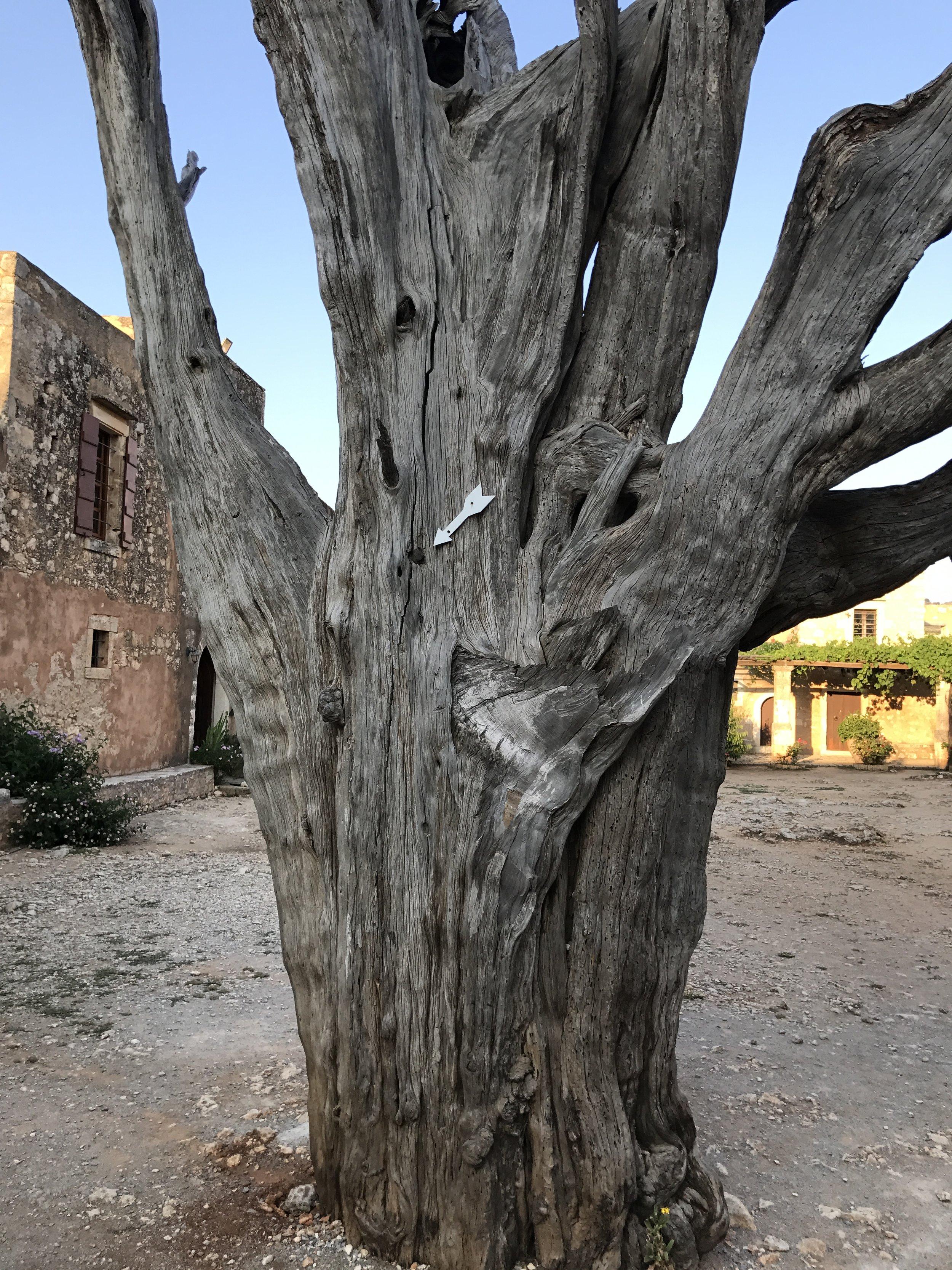 The Bullet Tree of Arkadi