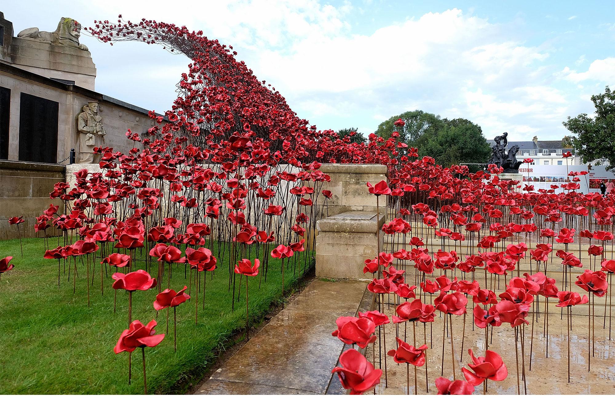 Poppies 8.jpg