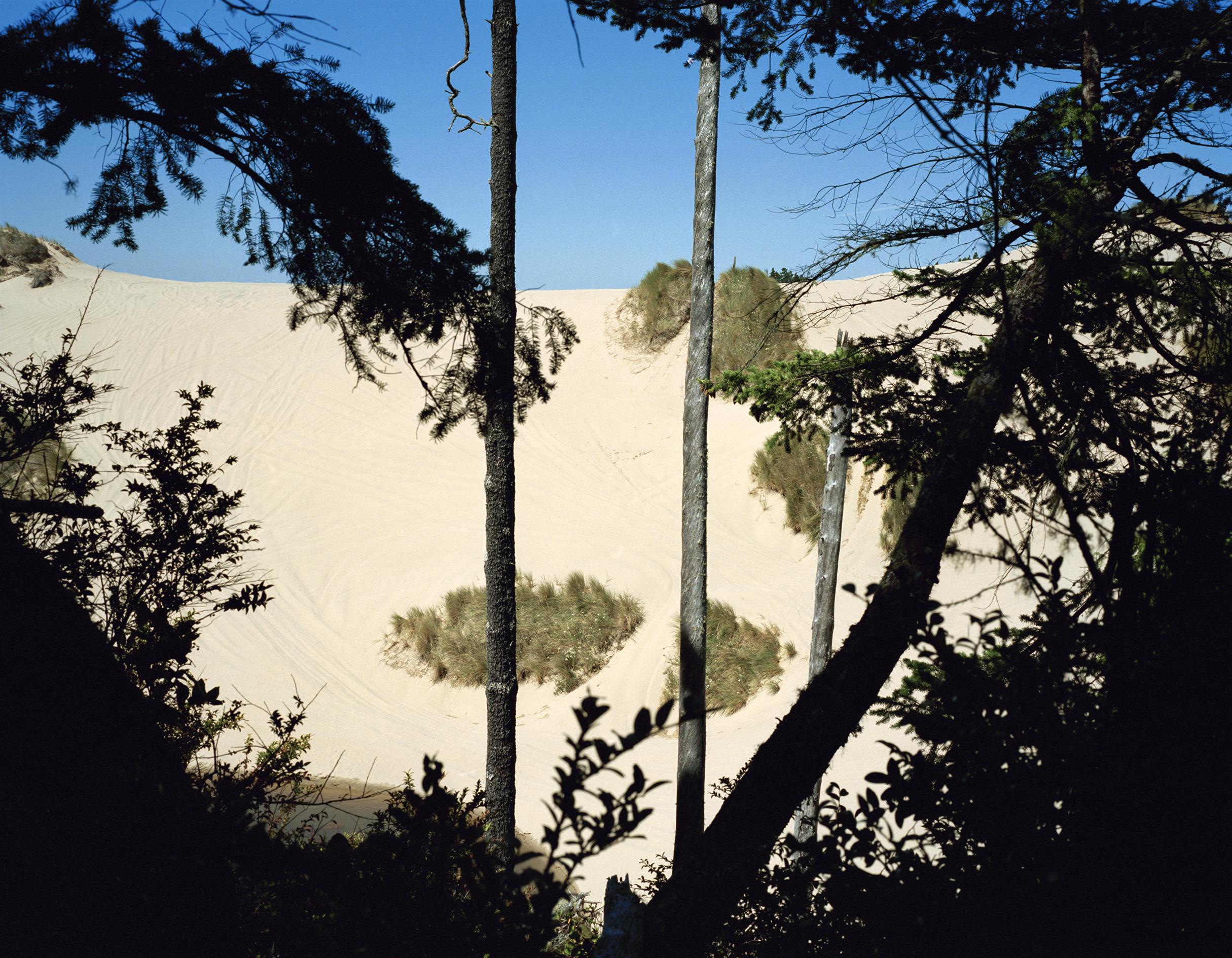 dunes_11x14.jpg