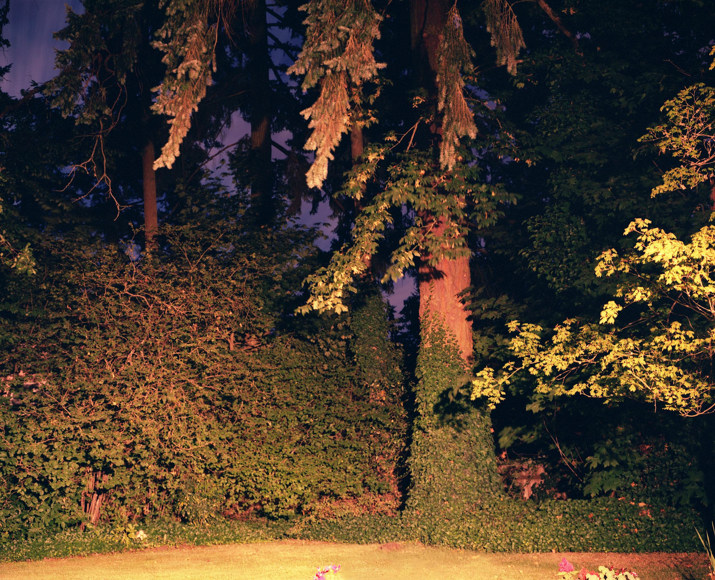 dmiller_bkyrd_a_tree.jpg