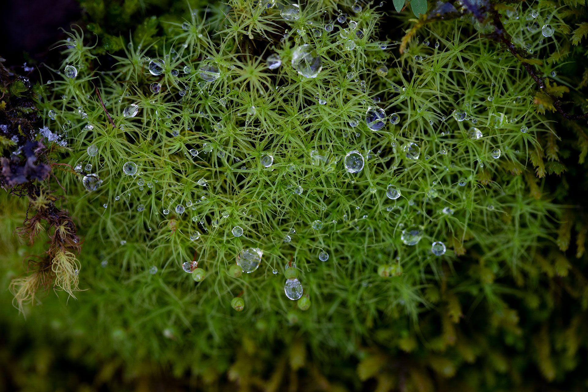8961_Grass-Droplets-1920.jpg