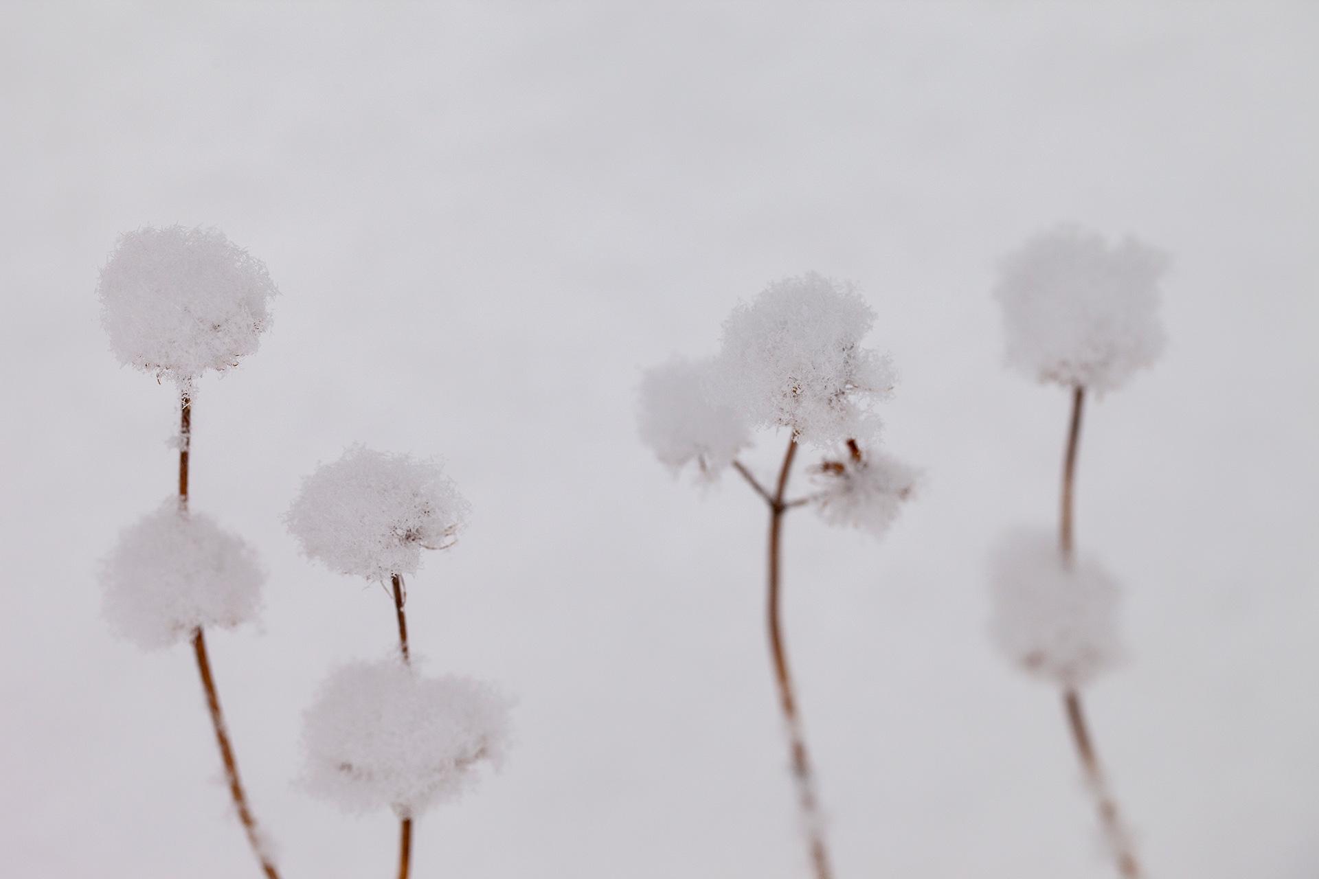 4855_Snowballs_1920.jpg