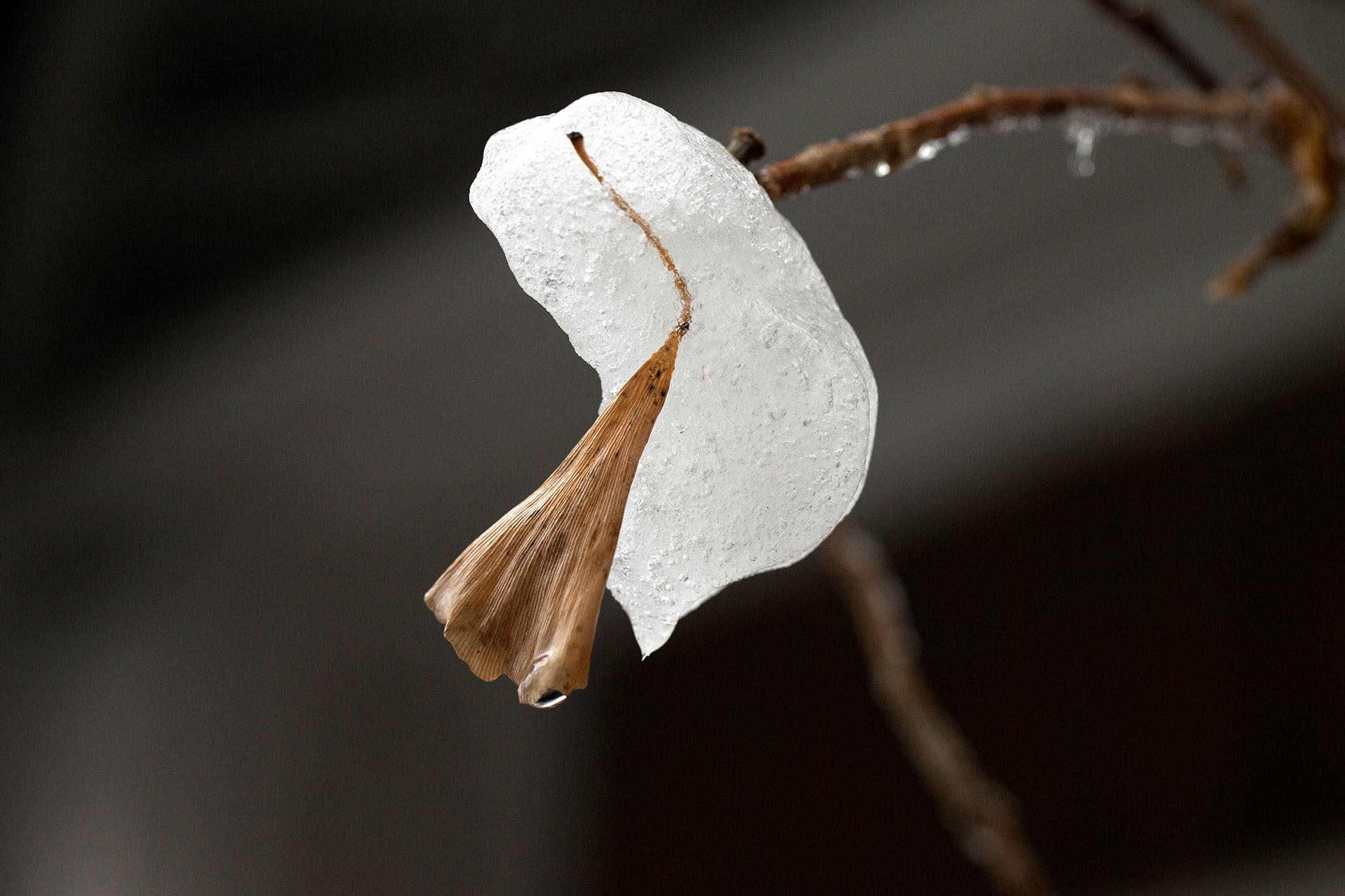 1554_leaf_in_ice_1920.jpg