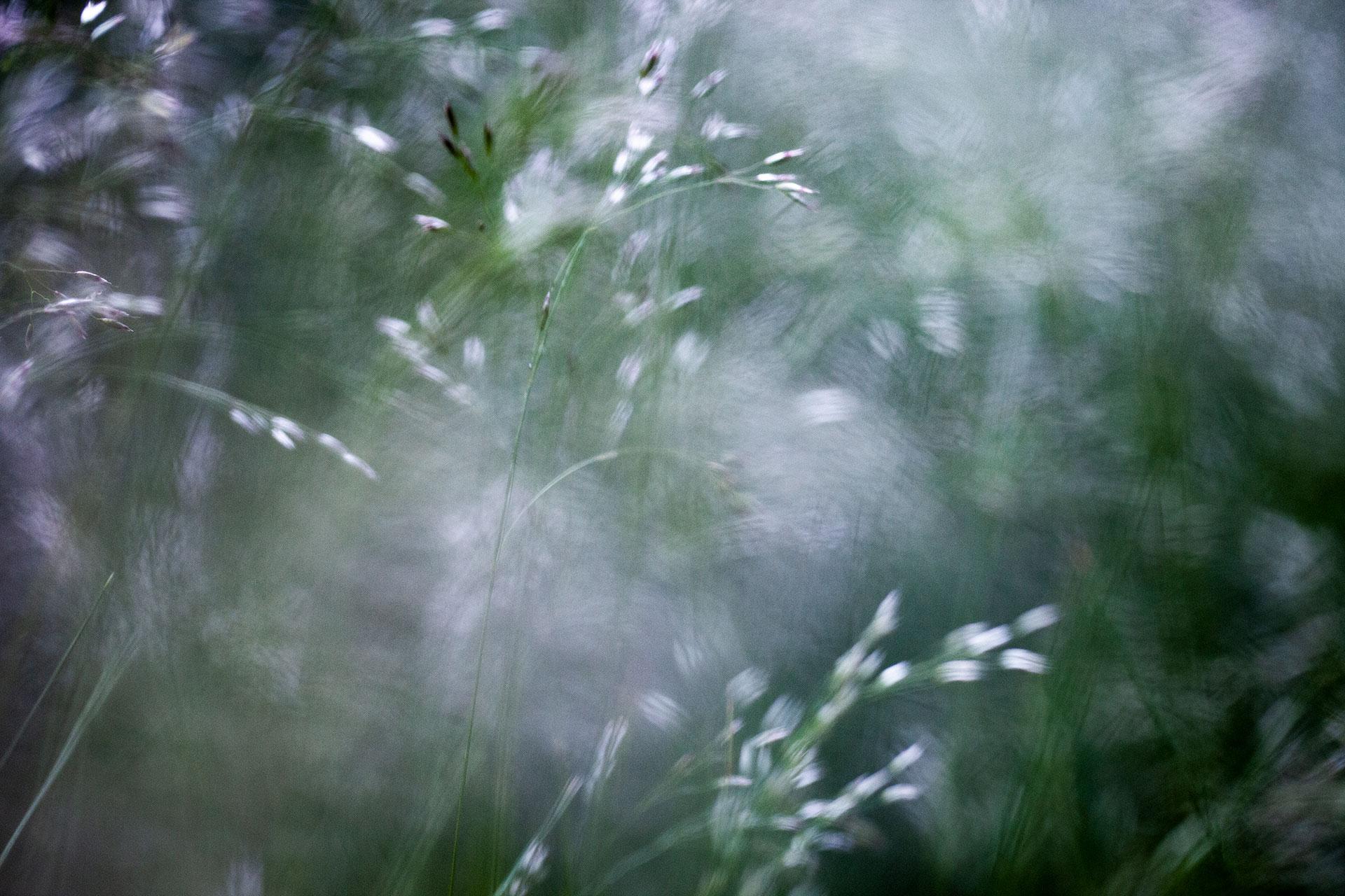 9603_grass_swirl_1920.jpg