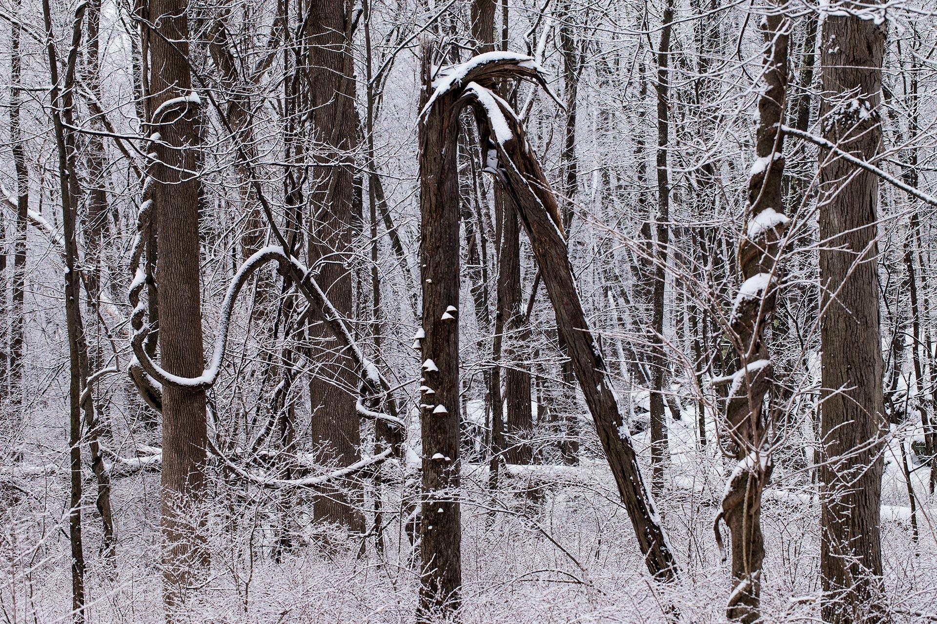 4813_trees_snow_1920.jpg