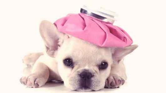 Sick-Puppy-Large.jpg
