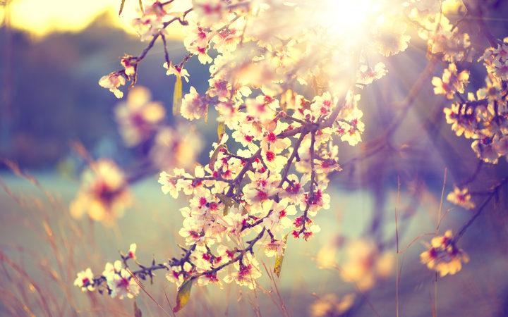 eight_col_spring.jpg