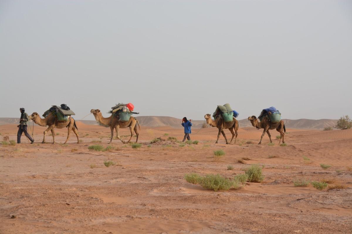 caravan_travel_desert_karg-1324082.jpg!d.jpeg