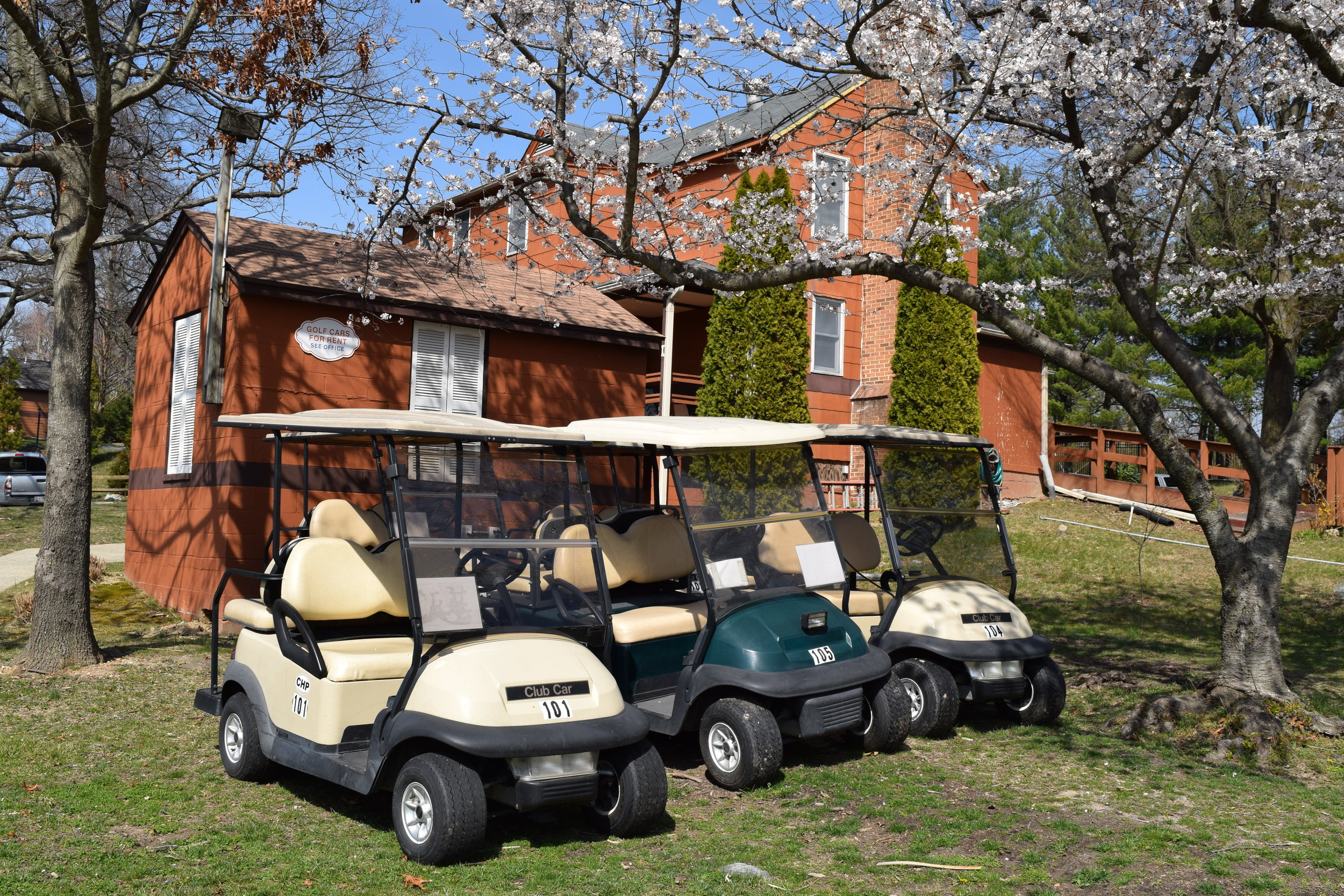 Golf Carts Parked Beneath Plum Blossoms at Cherry Hill Park