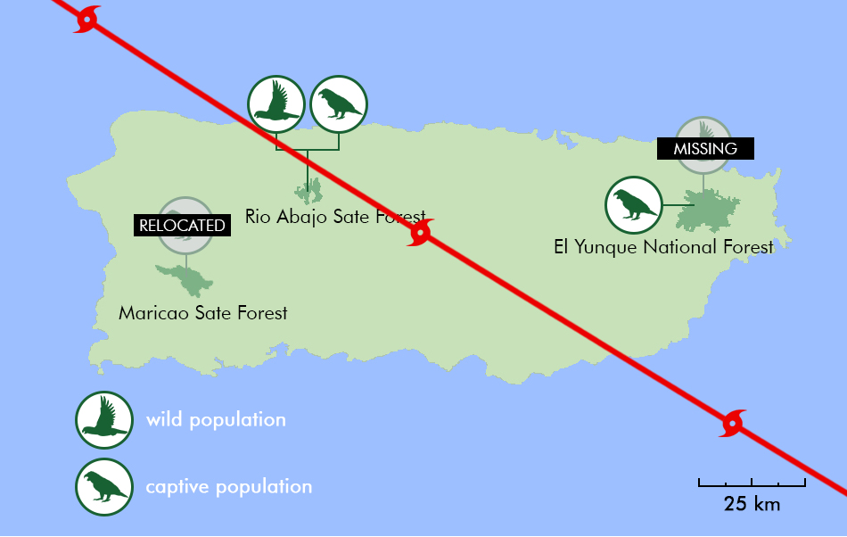 A map showing hurricane Maria's path after it made landfall on September 20, 2017. Most of the wild parrots in the El Yunque National Forest remain unaccounted for. All captive parrots in the Maricao State Forest had to be relocated to another facility.