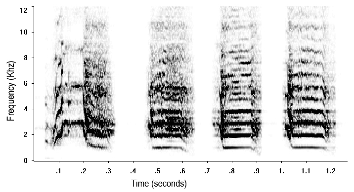 "Sonogram of a Puerto Rican parrot "" caw "" call. Sonograms are basically ""pictures"" of sound."