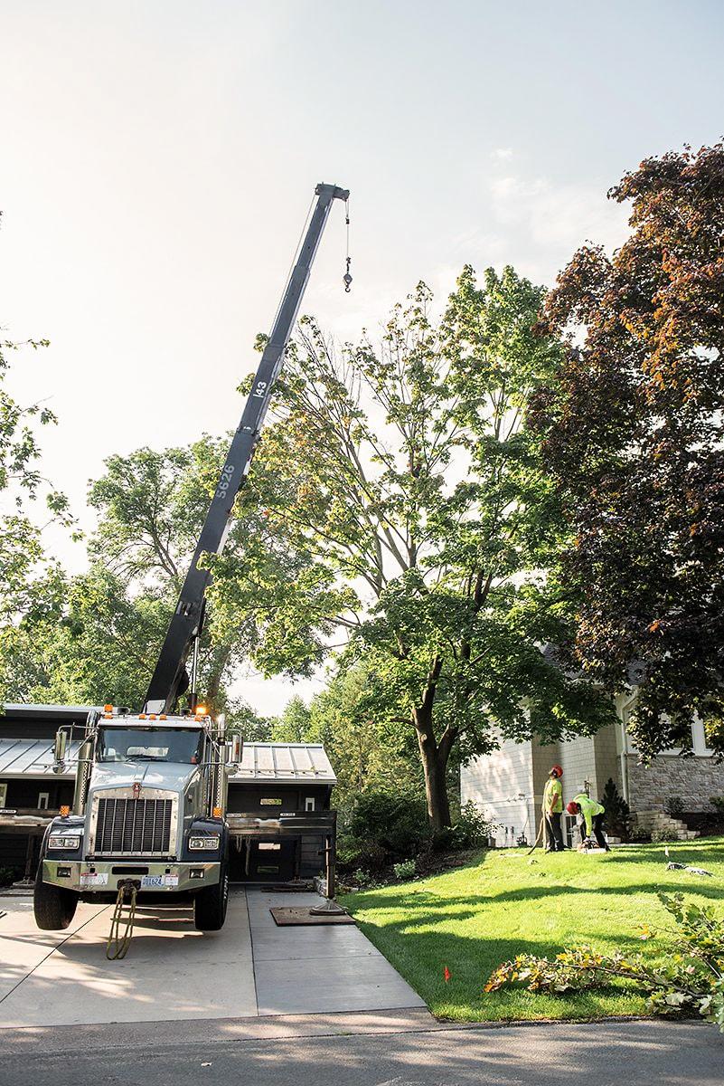birch tree care crane.jpg