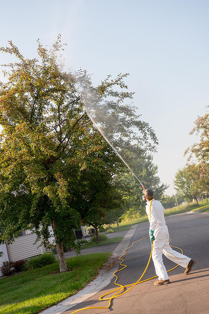 japanese beetle spray.jpg