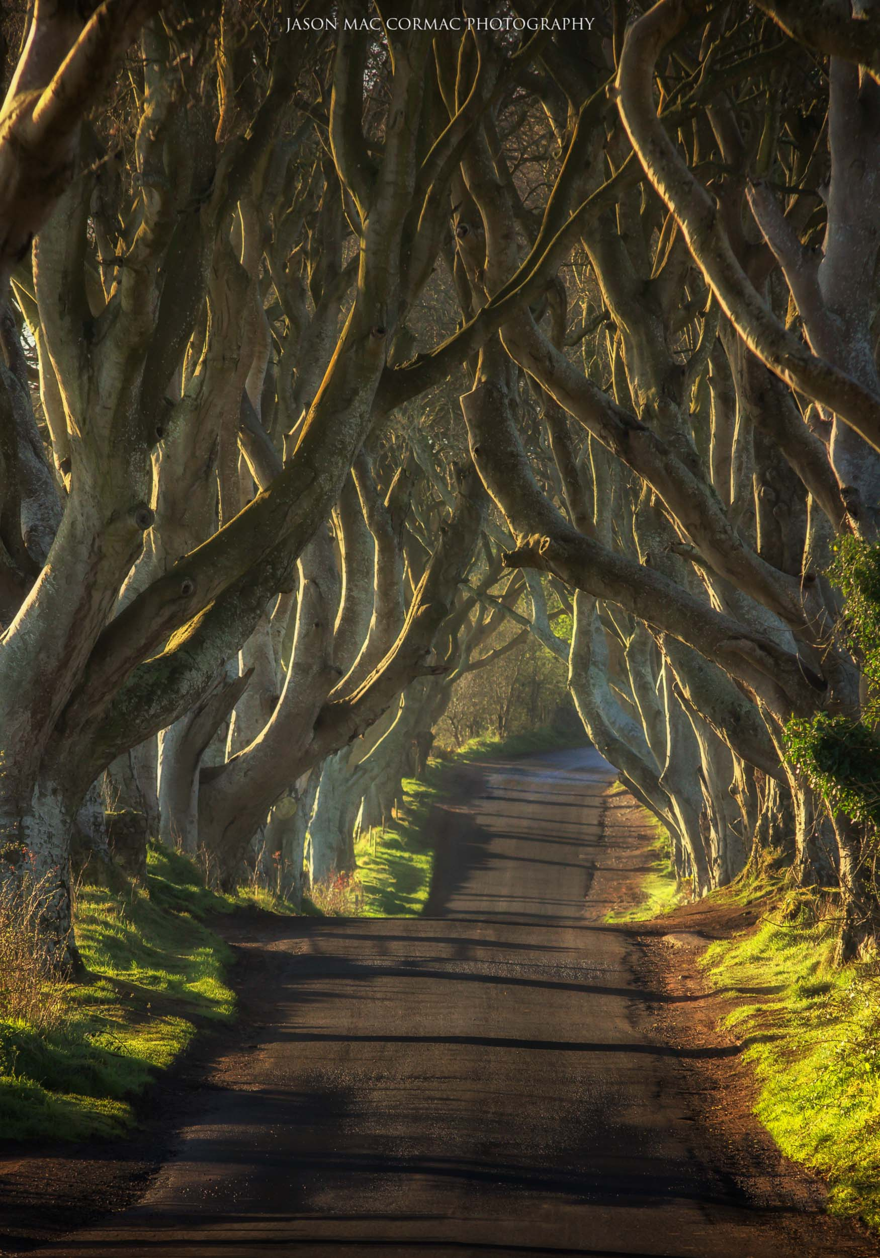 15. Dark Hedges