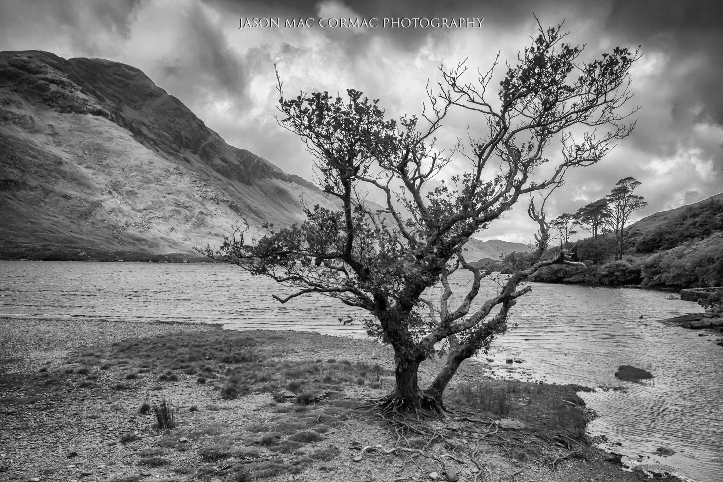 Black and White. Lone Tree in Doo Lough, Mayo