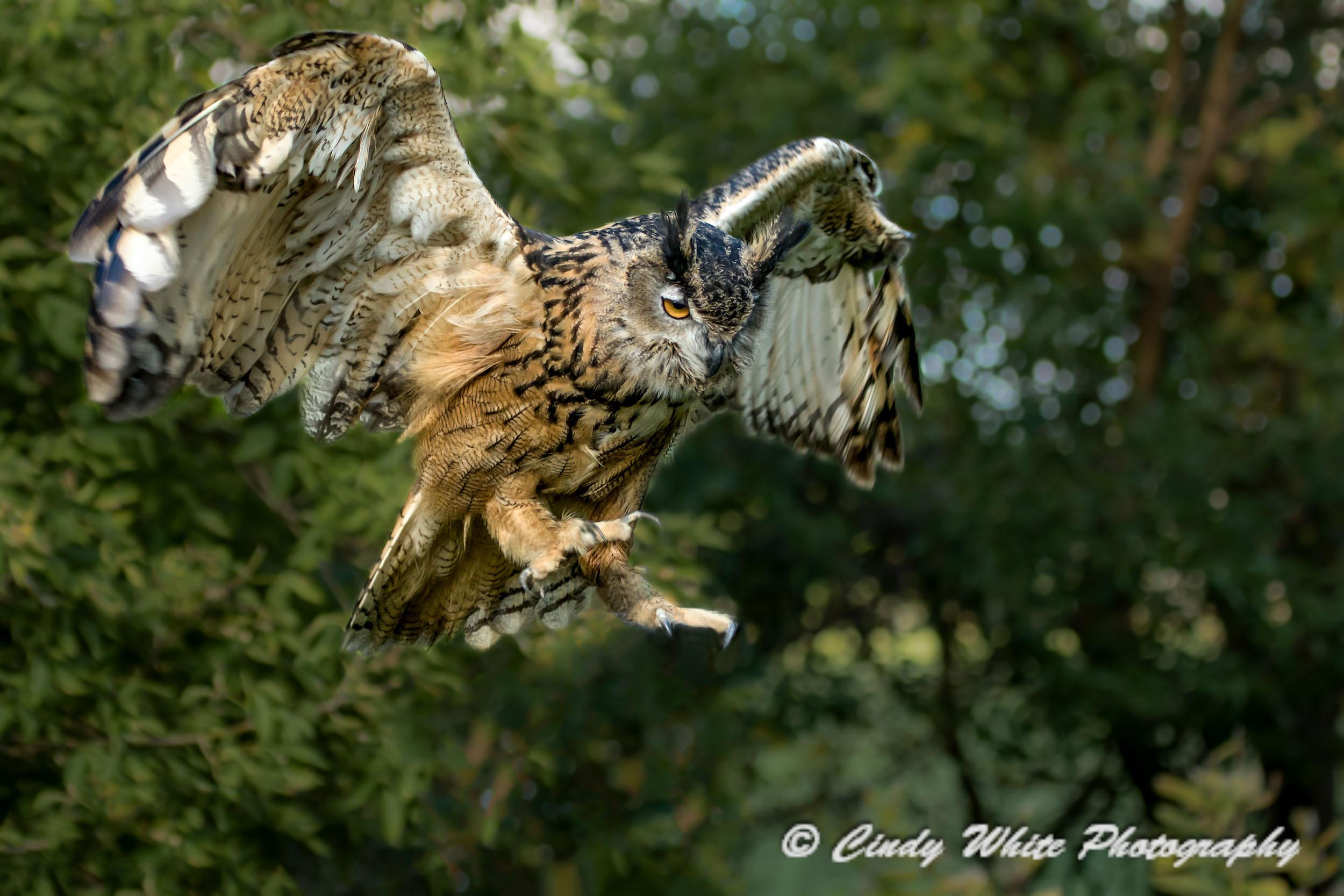 Owl9499.jpg