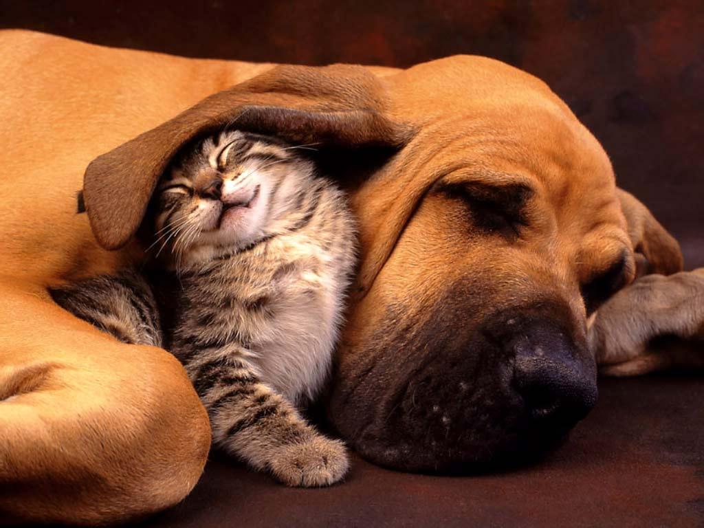 hound and cat.jpg
