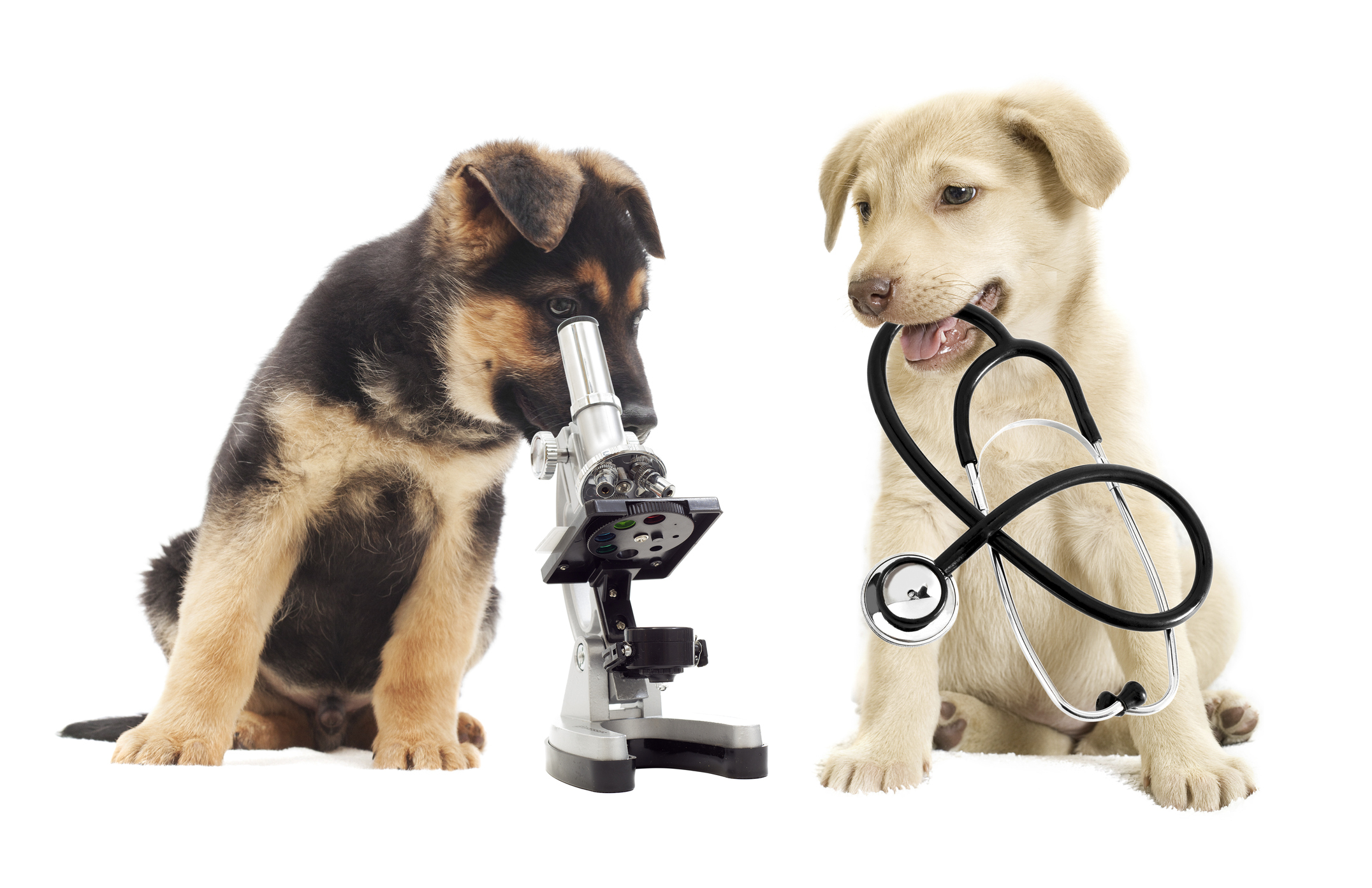 Call or Come By TodayTo Schedule your pet's veterinary appointment - Veterinary : (325) 284-3017