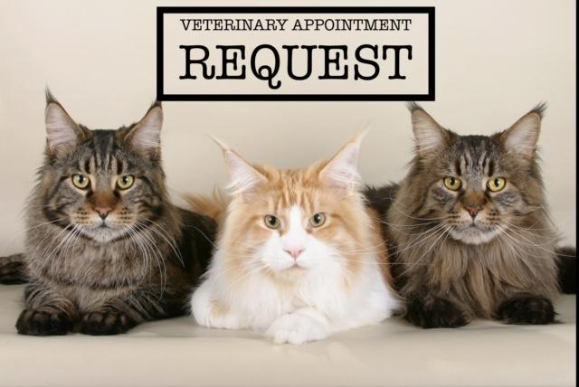 veterinaryappointment.JPG
