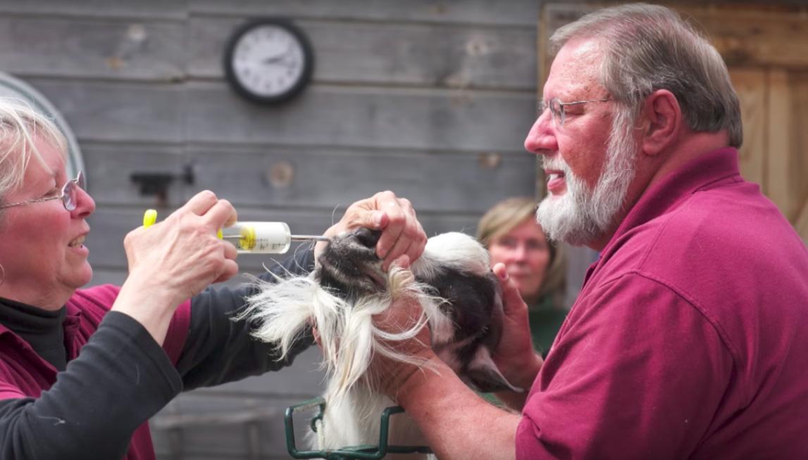 De-Worming Goats