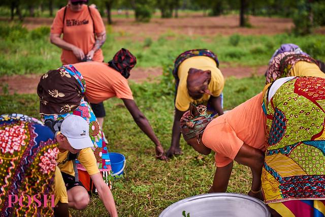 Women of the Shea Sisterhood in Gizaa Gunda, Ghana harvesting shea nuts for sustainable shea butter in Perfectly Posh products