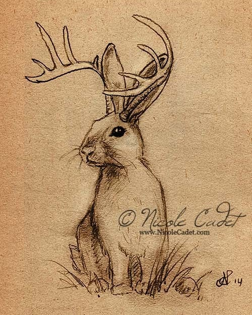A throwback piece from 2014. #jackalope #rabbit #bunny #sketch #mythicalcreature  #folklore