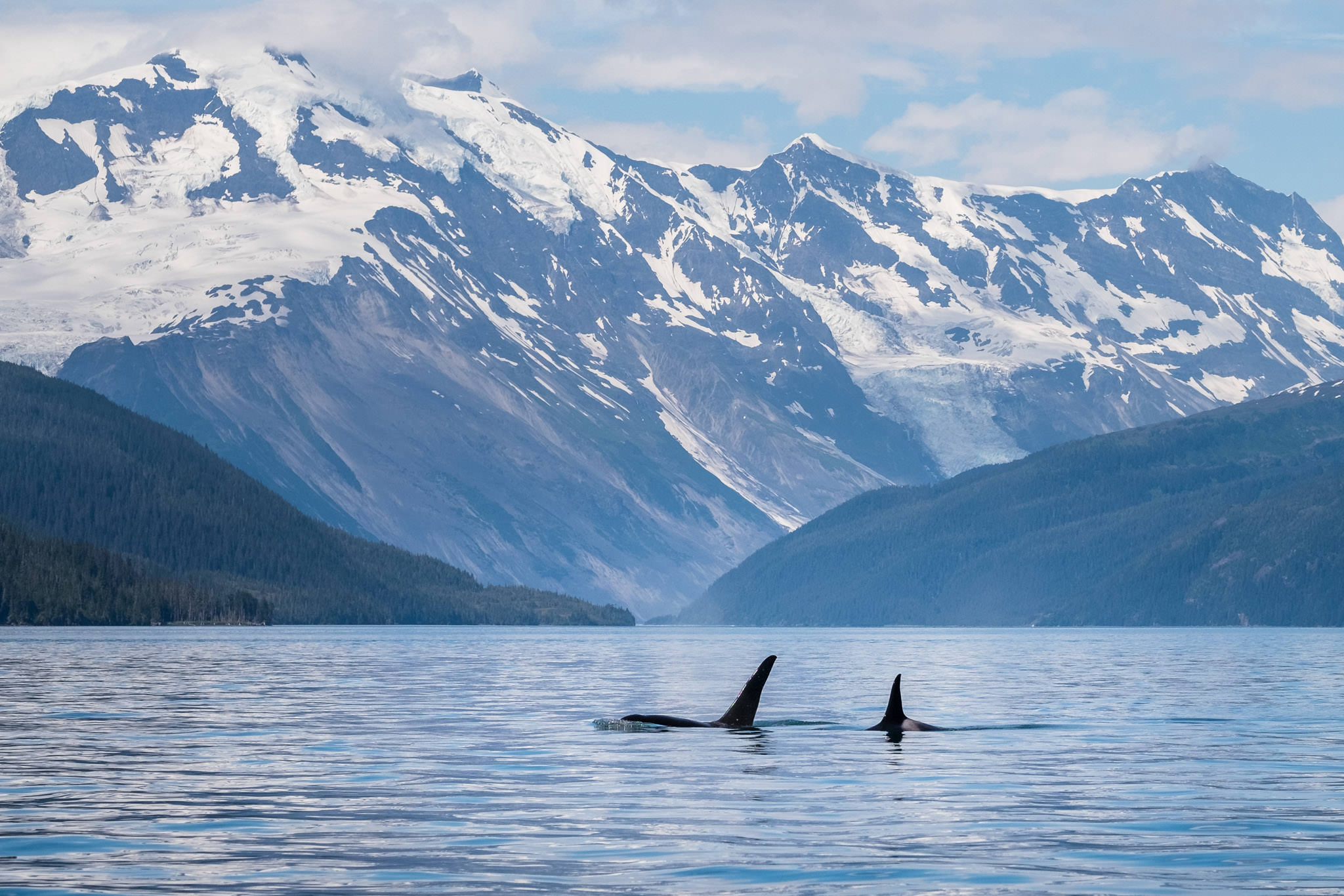PRINCE WILLIAM SOUND:  Kayakers sit spellbound as they witness orcas slicing still ocean waters. Towering blue-white glaciers slowly grind to the sea. The rugged lands and water of the Sound challenge both spirit and body. This location will be a perfect source of musical inspiration.