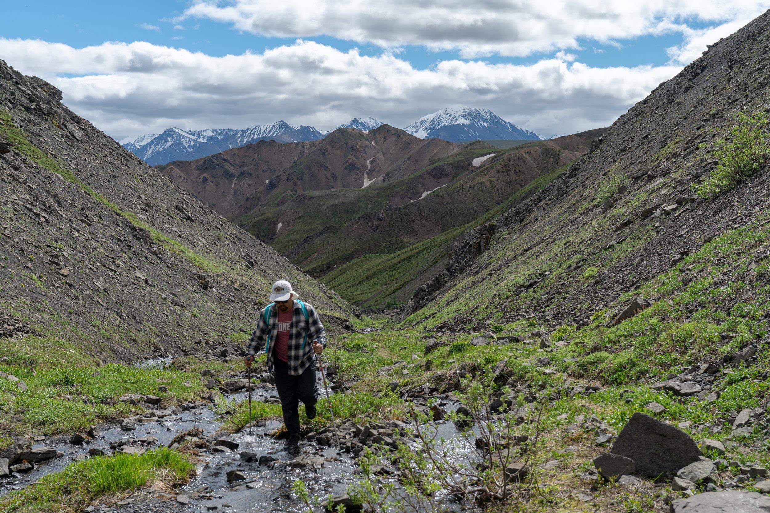 Composer David Wanner makes his way up Tattler Creek in Denali National Park (2018)