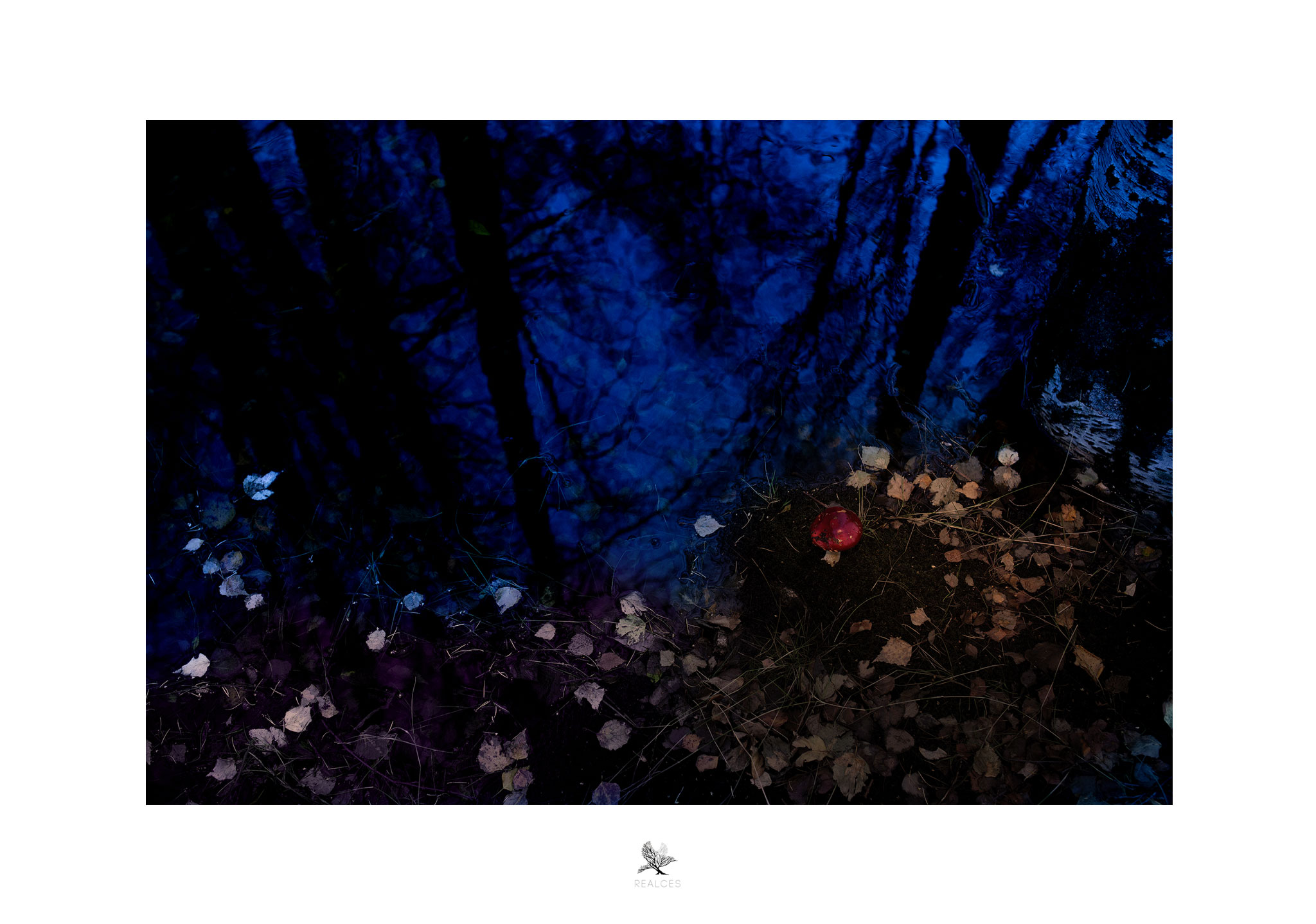 REalces_Outono.jpg