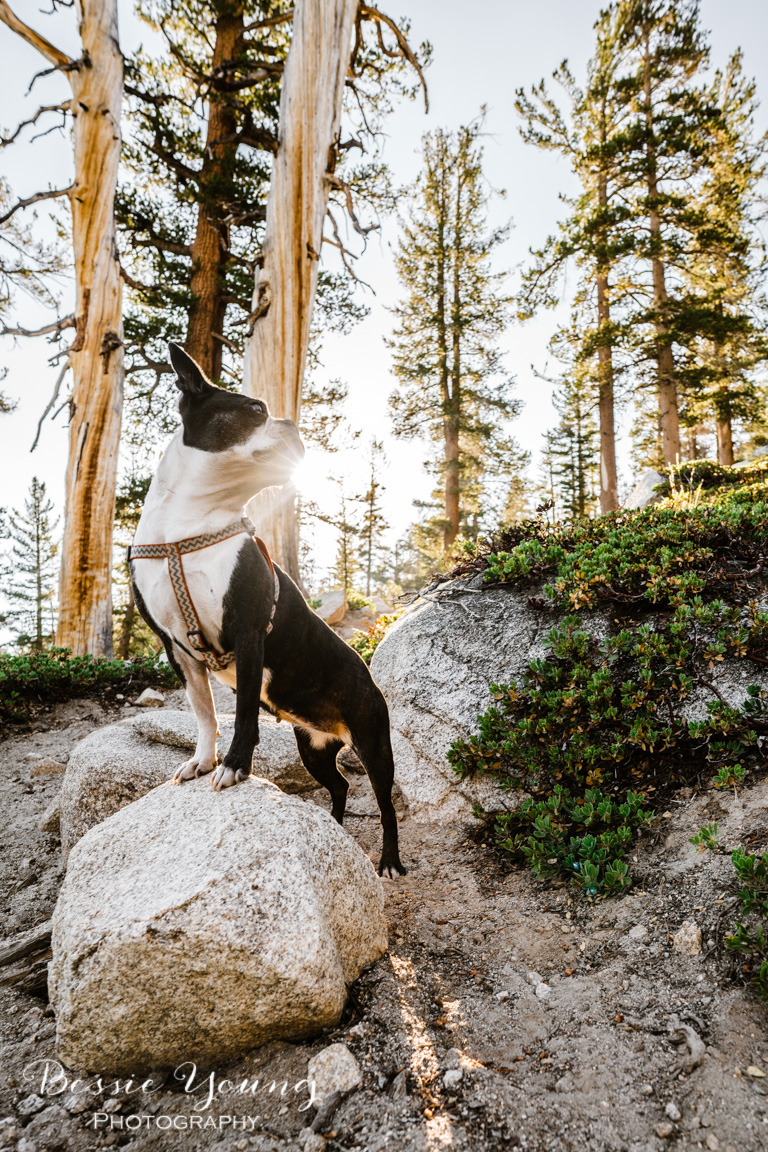 Backpacking Dinkey - Cliff Lake - 2018 - Bessie Young Photography-13.jpg