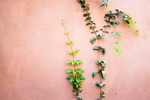Mexican-Home-Art-Vines-mexico-framed-karina-mora-prints-.jpg
