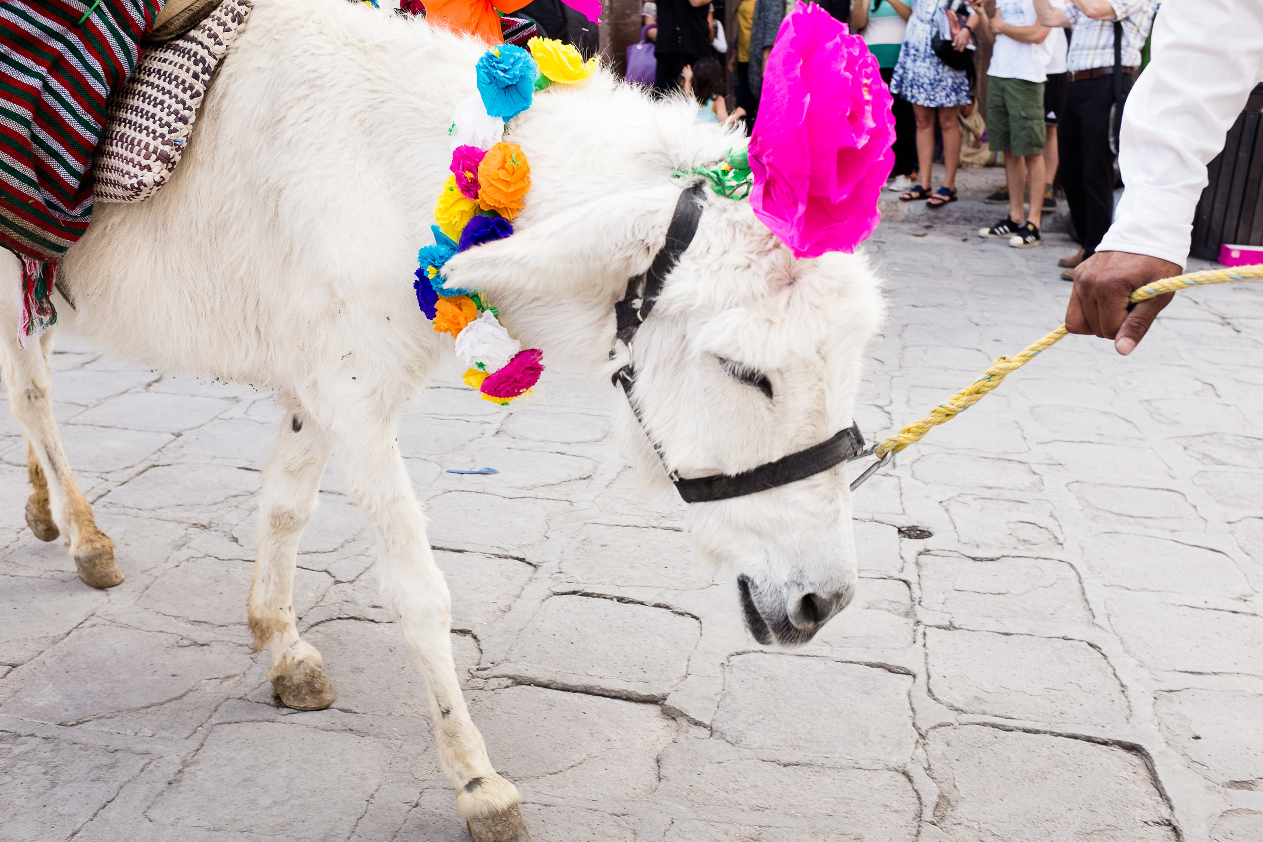 mexican-fine-art-wedding-traditions-donkey-mexico-karina-mora-prints-4.jpg